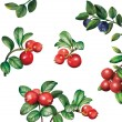 Постер, плакат: Berries: bilberries blueberries cranberries with leaves