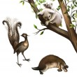 Australian animals: koala, platypus and lyrebird — 图库照片