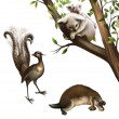 Australian animals: koala, platypus and lyrebird - Stock Photo
