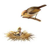 Un pajarito, pájaro pájaro nido y bebé de tragar arena martin — Foto de Stock