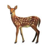 European Roe Deer, Capreolus capreolus — Stock Photo