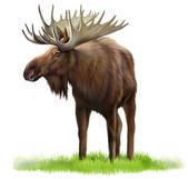 лось на траве — Стоковое фото
