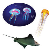 Stingray, marine slope, Yellow jellyfish and blue medusa — Stock Photo