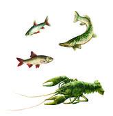 Green Crawfish, pike, minnow, gudgeon — Stock Photo