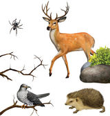 Deer, spider. hedgehog, cuckoo on a tree branches — Stock fotografie