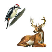 Woodpecker, Deer. — Stock Photo