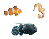 Monk fish, clown fish and sea horse — Stock Photo