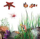 Sea star, clown fish, sea horses and shells — Stock Photo