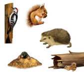 Squirrel, chipmunk, hedgehog, Woodpecker and a mole — Stock Photo
