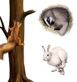 Squirrel on a tree, sleeping badger, running hare — Stock Photo