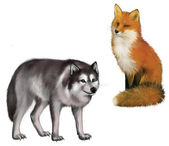 Sitting Fox and Wolf — Stock Photo