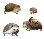 Four-toed Hedgehogs — Stock Photo
