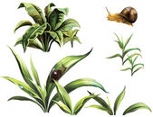 Wild plants and snails — Stock Photo