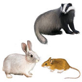 Badger, Rabbit, and Mouse — Stock Photo