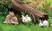 Rabbit family eating grass under fallen tree — Stock Photo