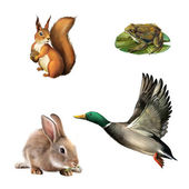 Squirrel, toad, rabbit and drake — Stock Photo