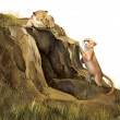 Lion Cubs playing on the rocks. Lion cave. - Stock Photo
