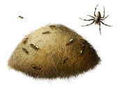 Anthill with ants. Spider — Stock Photo
