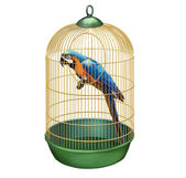 Parrot in a retro cage. Big Blue macaw (Ara ararauna) in bird cage — Stock Photo