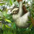 Sloth, three toe male juvenile hanging in tree in tropical rainforest jungle, Illustration — Stock Photo #22302123