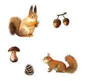 Eurasian red squirrel, White mushroom and cone Isolated illustration on white background. — Stock Photo
