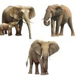 Elephants, Baby elephant, big adult African elephant Isolated on white background. — Stock Photo