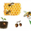 Bee on cell, bees and honey, bumblebee — Stock Photo