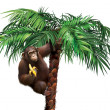 Royalty-Free Stock Photo: Brown monkey on palm tree eating a banana.