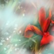 Red Iris flower on Blue-green background — Stock Photo