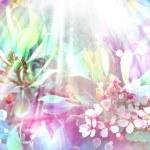 Beautiful spring background with pink Cherry blossom, sakura flowers — Stock Photo #24445043