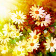 Daisy flower background. Sunshine. Spring background - Stok fotoğraf