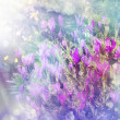 Purple flower background. Sunshine. Spring background - Stok fotoğraf
