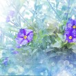 Spring background with a purple flowers - Zdjęcie stockowe