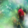 Red flower background - Zdjęcie stockowe