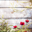 Red flowers on a background of wooden wall — Stock Photo