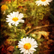 ストック写真: Field of daisy flowers