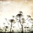 Dry Fennel flowers silhouette on a sky background in grunge and retro style. Summer field. Vintage card spring background — Stock Photo #24447899