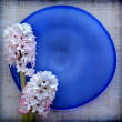 Two hyacinth flower on blue glass plate — Foto de Stock