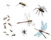 Hata, salyangoz, yusufçuk, larvalar, enayi balığı, örümcek su — Stok fotoğraf