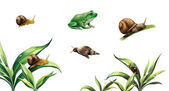 Snails on plants, Rana esculenta. Green (European or water) frog — Stock Photo