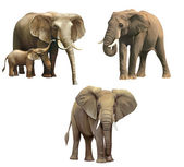Elephants, Baby elephant, big adult African elephant Isolated on white background. — Stock Photo