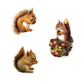 Red squirrel with cane, Baby squirrel, The American gray squirrel, Isolated on white background. — Stock Photo
