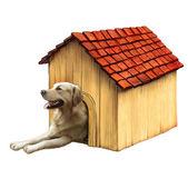 Hund i en hund hus. golden retriver — Stockfoto