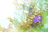 Mor çiçekli bahar arka plan — Stok fotoğraf