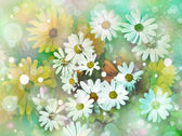 Daisy flower background. Sunshine. Spring background — Stock Photo