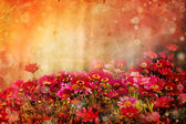 Beautiful spring background with little red and pink flowers — ストック写真