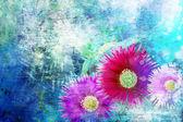 Delosperma - pink succulent flowers on bright blue background — Stock Photo