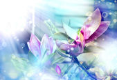 Flores de magnolia — Foto de Stock