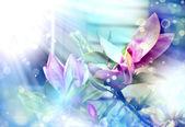 Magnolia blommor — Stockfoto