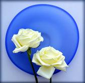 两个白色的蓝色玻璃盘上的玫瑰 — 图库照片